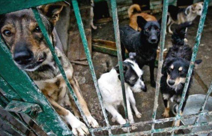 Сьогодні вінничани зможуть врятувати бездомних собак від евтаназії