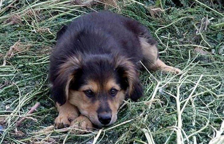 У Вінниці не вбиватимуть бездомних тварин
