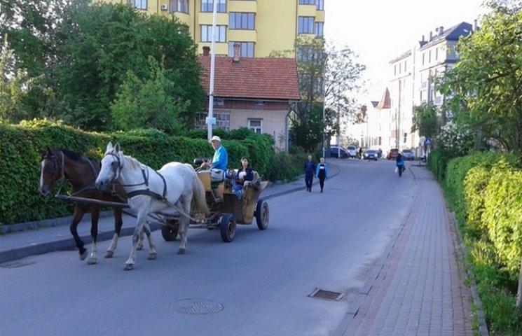 Як на Львівщині господарі на парканах ек…