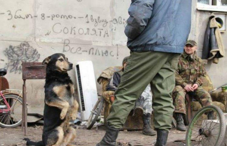 Чем занимаются на Донбассе лучшие друзья бойцов АТО-3