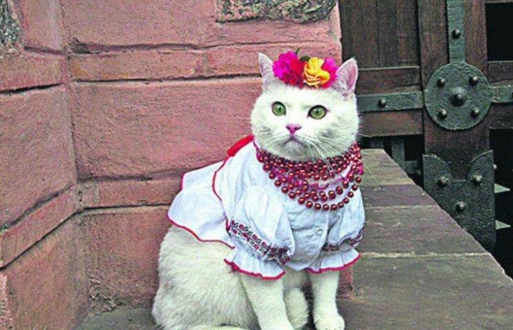 Как проходит День вышиванки у котов