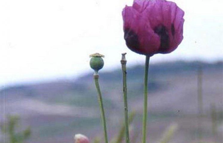 За мак на городі вінничанин може сісти на три роки