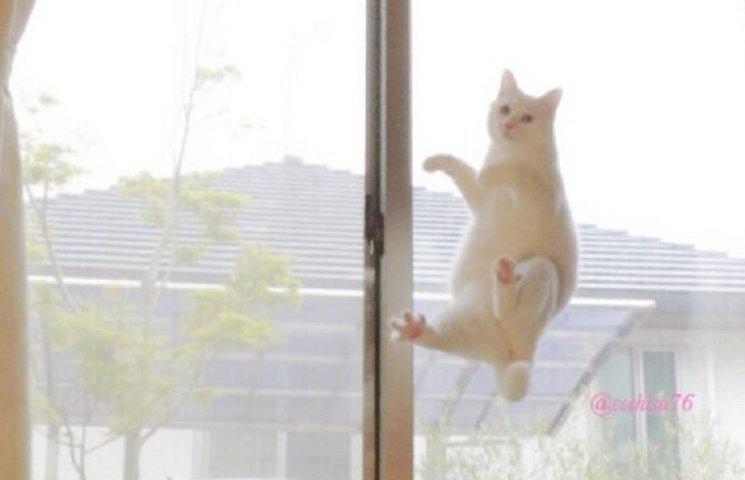 Белый кот, который танцует балет пока никто не видит, взорвал сеть