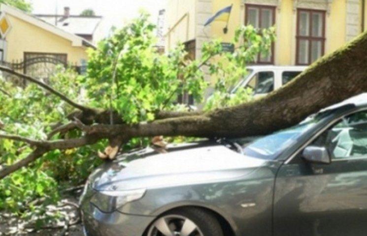 """У Вінниці дерево потрощило """"БМВ"""""""