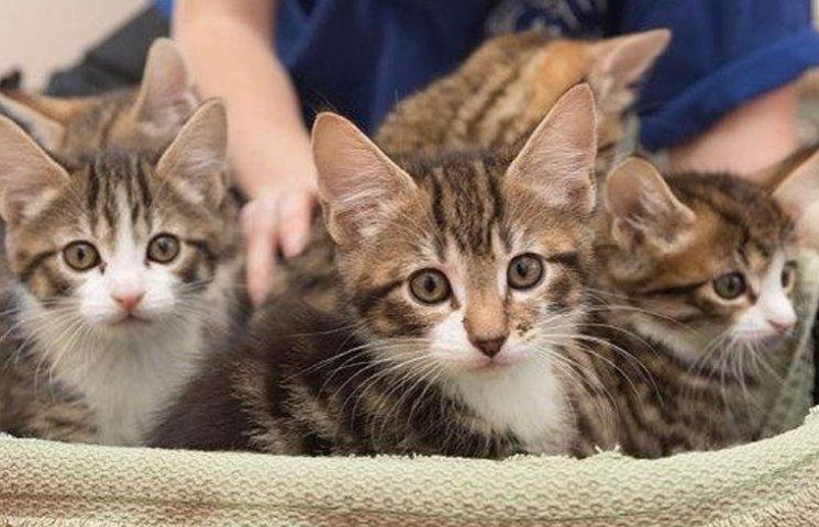 Підвіска на дупу і облизувач: ТОП-8 кумедних девайсів для котів