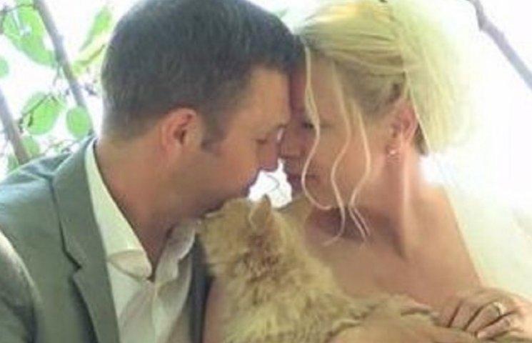 Канадська пара запросила на весілля тисячу котів