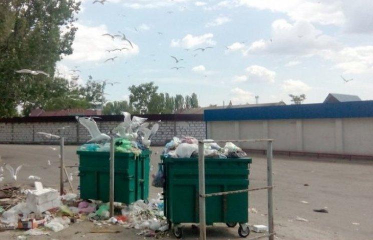 В Николаеве десятки чаек атаковали мусорные баки возле жилых домов