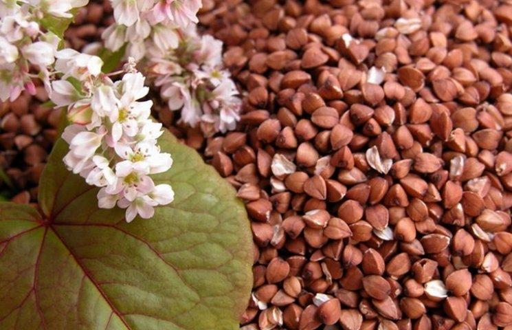 У Хмельницькій облдержадміністрації аграріям радять сіяти більше гречки