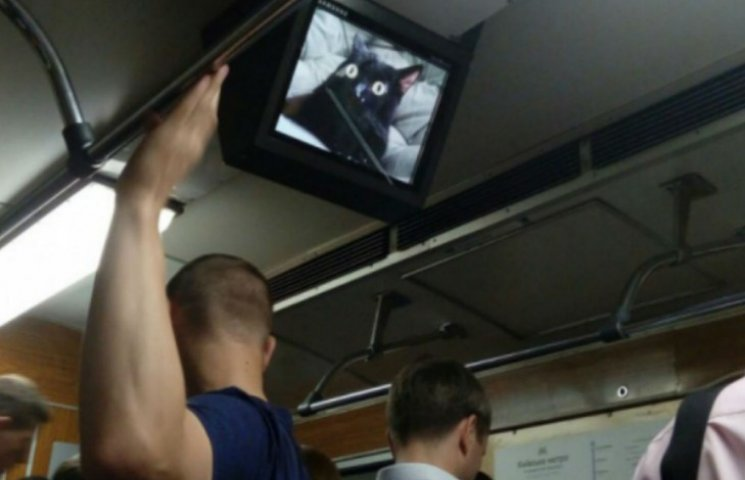 Хакеры запустили котов в вагоны киевского метро (ФОТО)