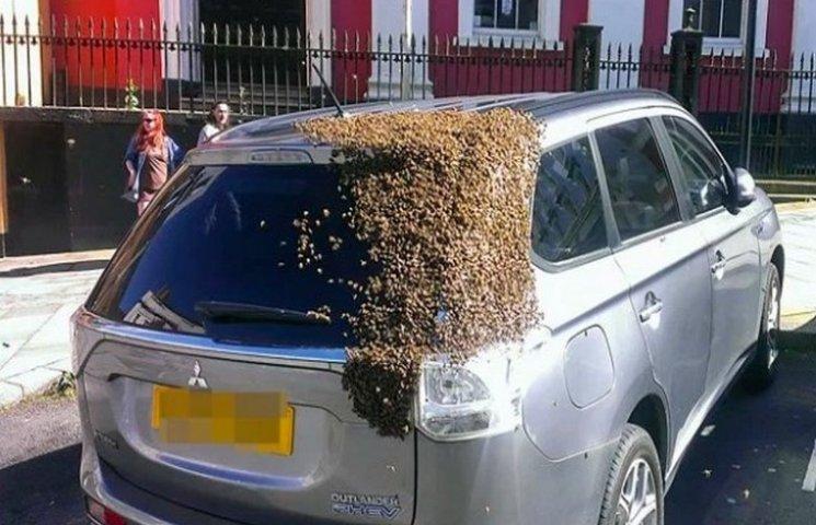 20 тисяч бджіл дві доби переслідували авто, в якому застрягла матка