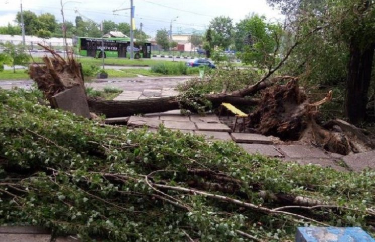 Стихія в Харкові зламала 120 дерев та паралізувала транспорт