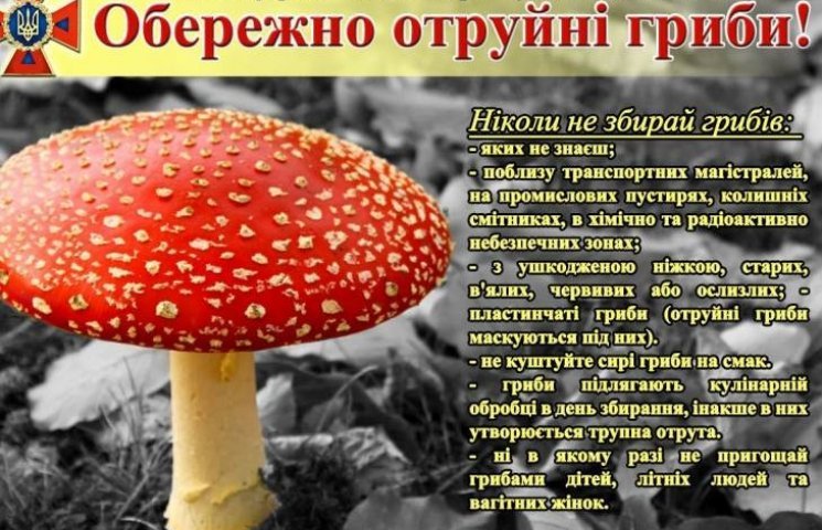 Обережно небезпека: рятувальники розповіли як не отруїтися грибами