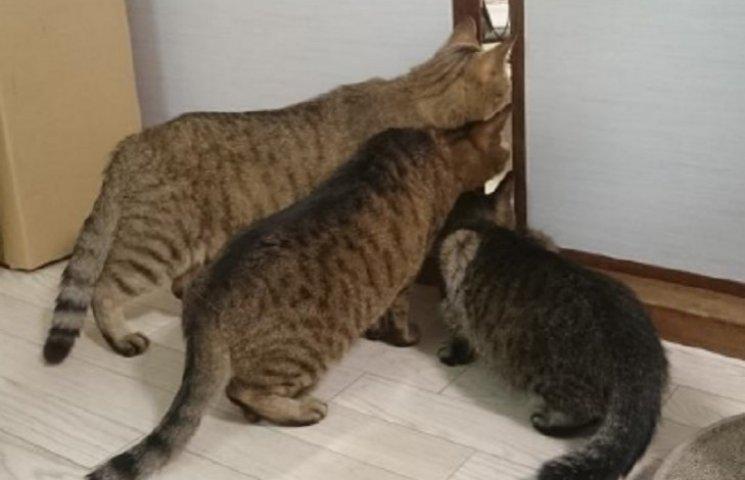 Как коты боялись пылесоса, но все равно следили за владельцем
