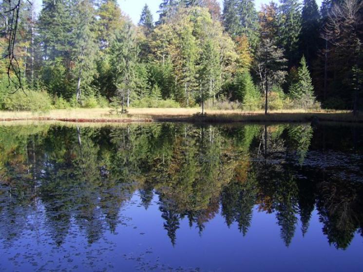 Де на Закарпатті можна знайти озеро, мал…