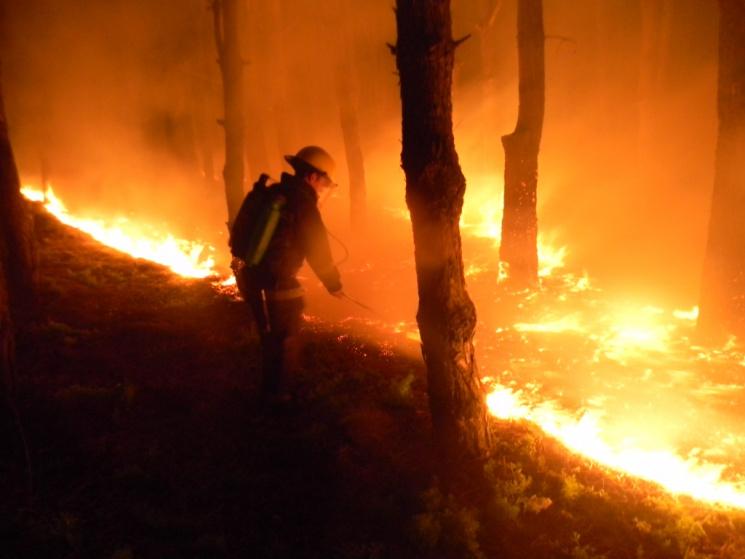 Херсонщина. Масштабне загоряння лісу