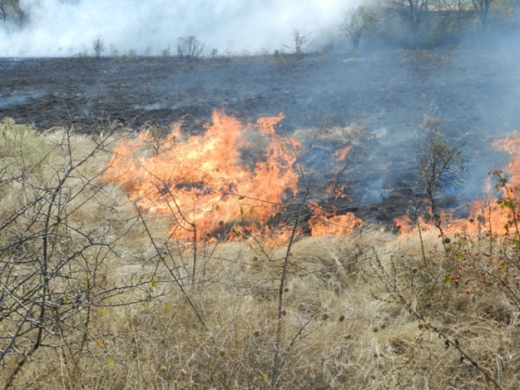 На Закарпатті з початку року вигоріло понад півтисячі гектарів сухої трави