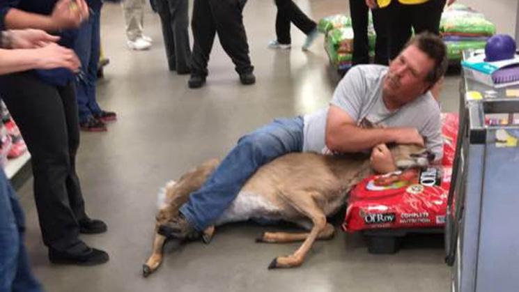 Як чоловік нейтралізував оленя, який напав на нього в супермаркеті