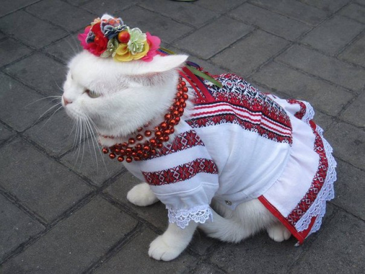 Засновниця Дня вишиванки: Хто страждав за можливість носити вишиванку, ніколи не одягне її на кота