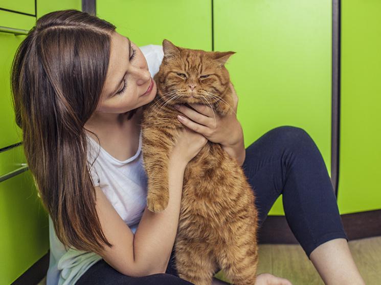 Чому коти кращі за чоловіків: 10 причин завести пухнастика