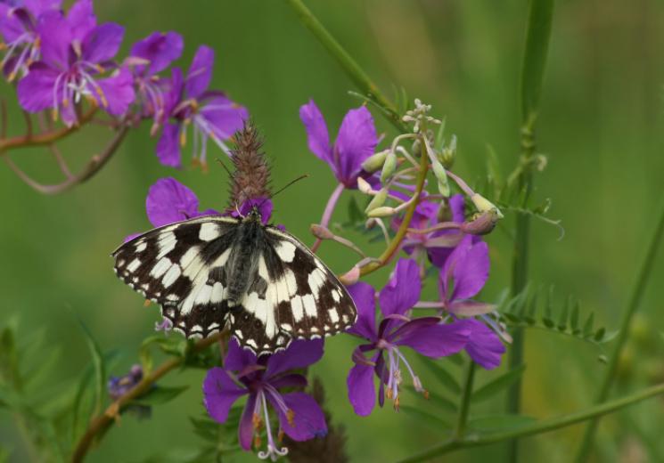 Чому рівно в полудень, 28 травня, не треба працювати, і що в цей день можна дізнатися у метеликів