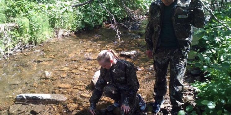 На Міжгірщині у ріки випустили 15 тисяч мальків форелі