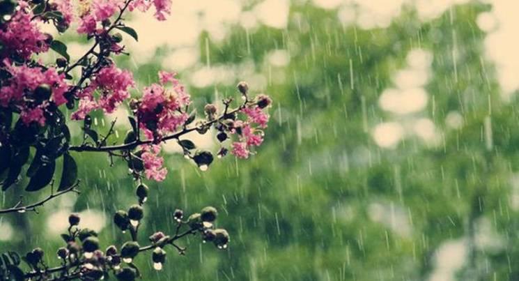 Чому восьмого травня треба радіти дощу і уважно спостерігати за птахами і веселкою