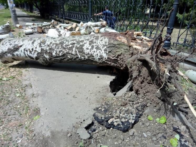 У Миколаєві через падіння старого дерева зіпсувалась дорога(ФОТО)