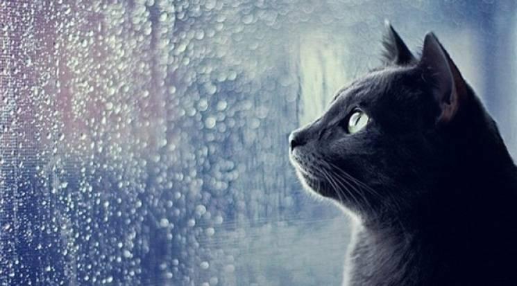 Новий тиждень у Вінниці почнеться з дощу…
