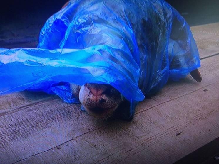 НаЛуганщине нетрезвый мужчина подбросил голову барана общественному активисту