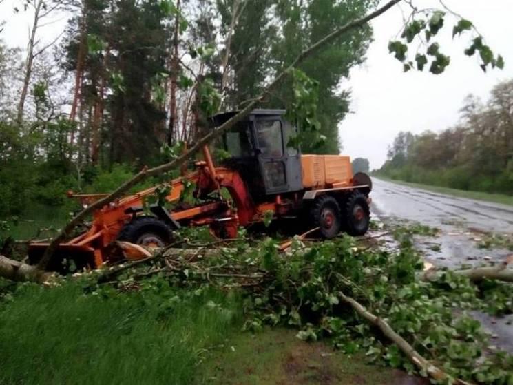 Дорожники прибирають повалені буревієм дерева на трасі Суми-Полтава (ФОТО)