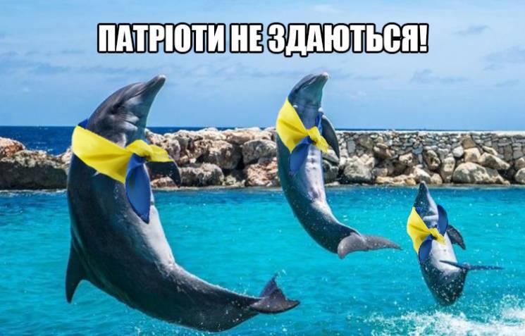 Як тварини помстилися Путіну за смерть бойових дельфінів (ФОТОЖАБИ)