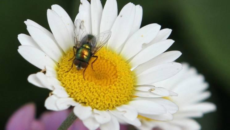 Як Львівщині здолати небезпечних комах