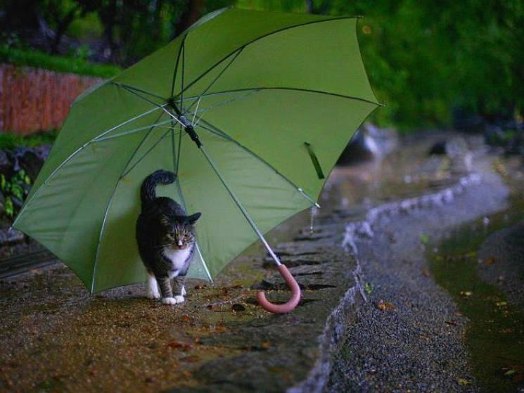 """Погода готує сумчанам """"повний набір примх"""""""