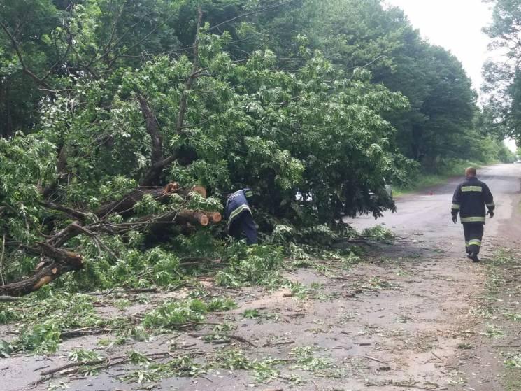 На Вінниччині повалене вітром дерево зупинило рух на автошляху (ФОТО)