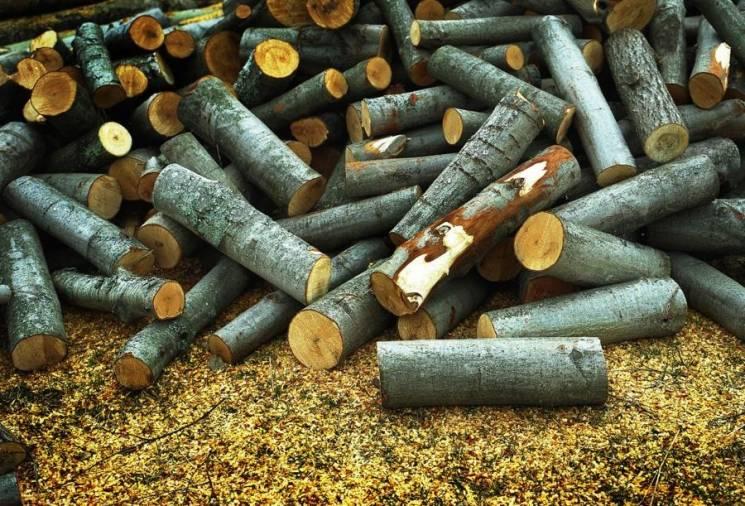 """На Вінниччині лісівники з """"портфелями"""" розкрадали ліс"""