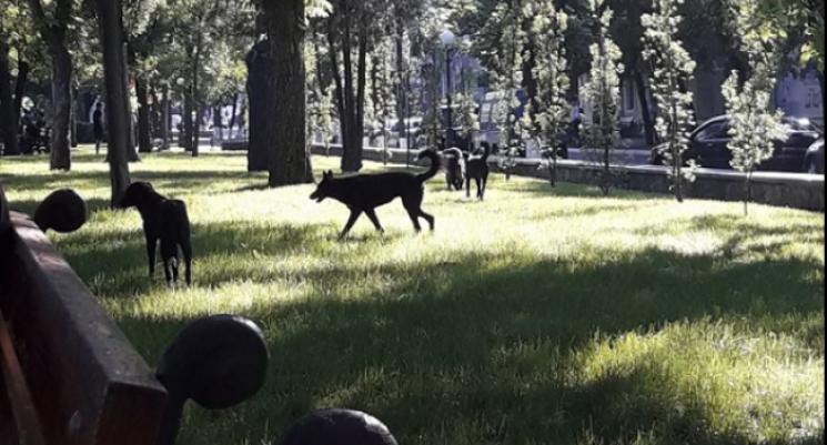 У Кременчуці зграя безпритульних собак лякає містян