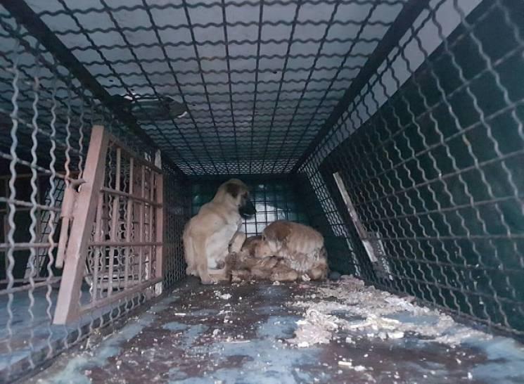 """Надія лише на Бріжіт Бардо: На """"собачій війні"""" у Бердянську рахують поранених"""