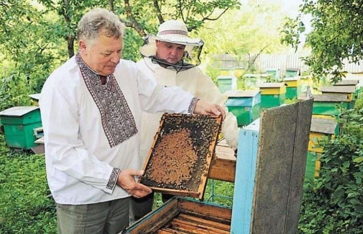 Миколаївські бджолярі жаліються на малий врожай травневого меду