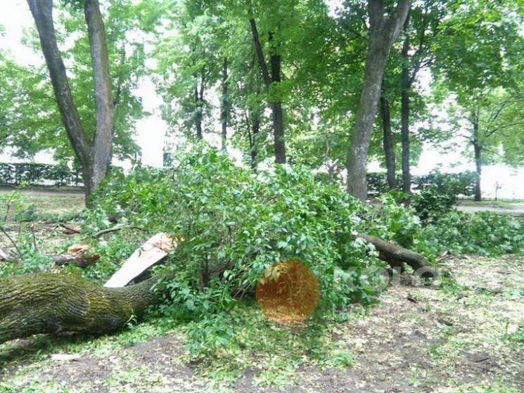Наслідки нічної негоди: Буря повалила дерева у Полтаві (ФОТО)