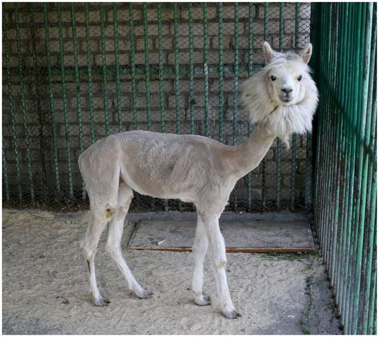 Пернаті та пухнасті: У Миколаївському зоопарку оселились нові мешканці (ФОТО)