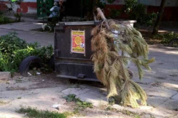 Запоріжці продовжують виносити на смітник новорічні ялинки (ФОТО)