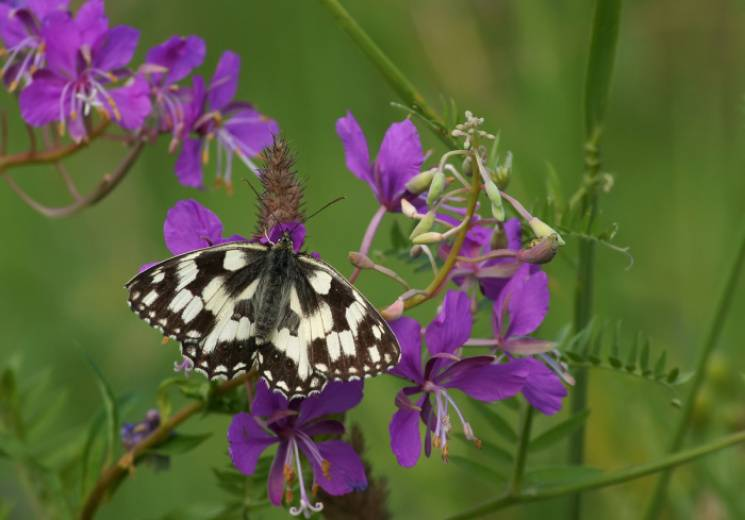 Чому опівдні, 28 травня, не треба працювати, і що в цей день можна дізнатися у метеликів