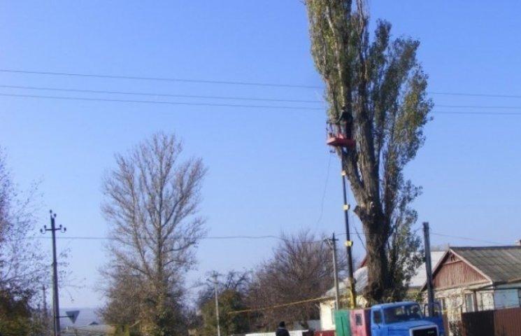 На Одещині знищують півстолітні дерева