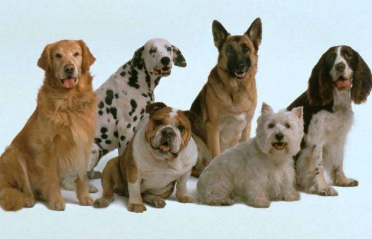 Притулок для тварин у Бородянці можуть віддати зоозахисникам
