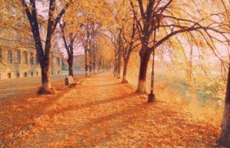"""Вулиці Ужгорода """"потопають"""" в осінньому листі"""