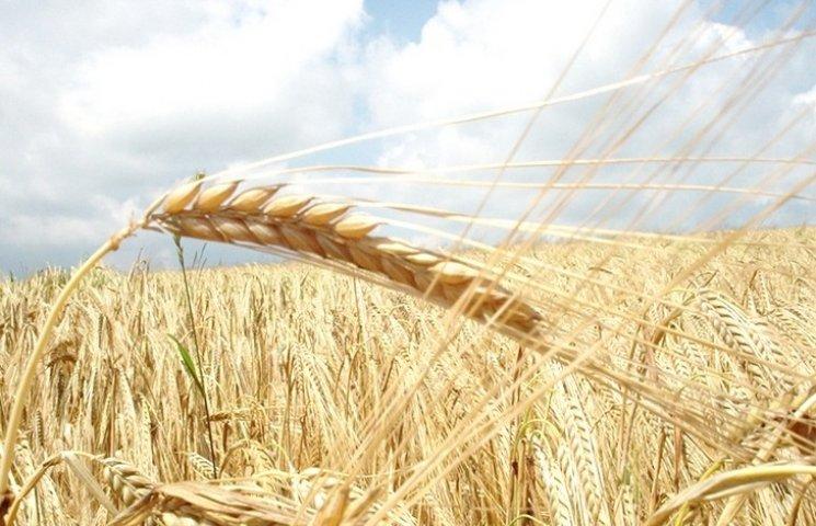 Полтавські аграрії намолотили рекордну кількість зерна