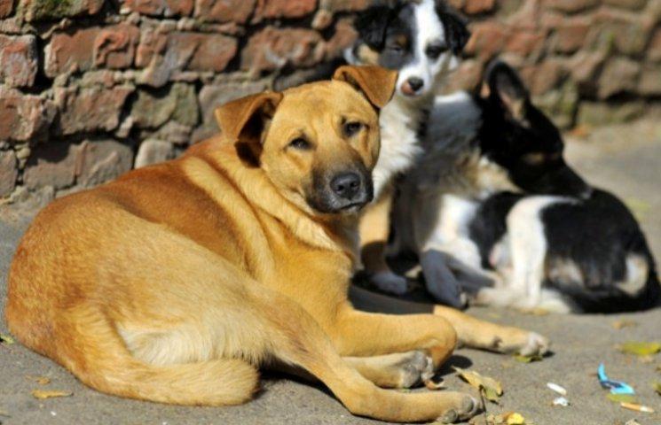 В Ужгороді організовують марафон майстер-класів для допомоги тваринам