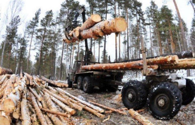 На Закарпатті лісівники отримують найбільші зарплати