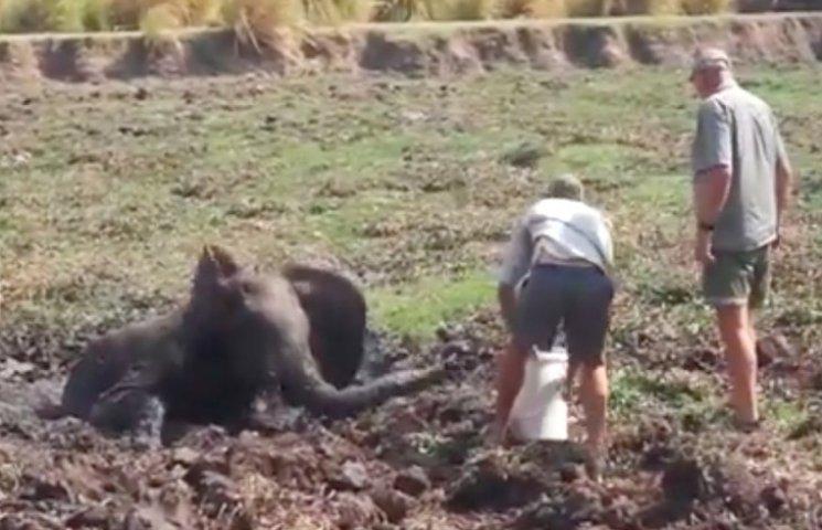 """""""Невдячне"""" слоненя в Зімбабве накинулося на своїх рятівників"""