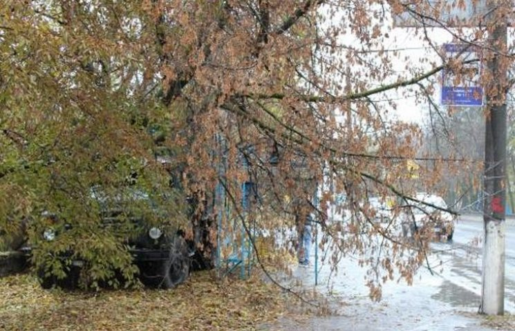 В Виннице на остановку общественного транспорта и припаркованную машину упало дерево